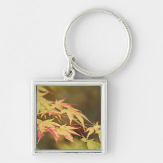 Green Acer Keychain