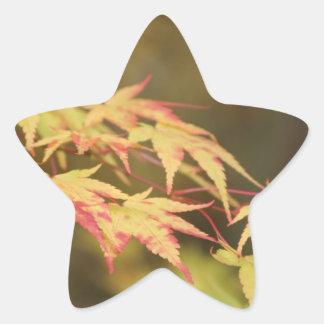 Green Acer Star Sticker