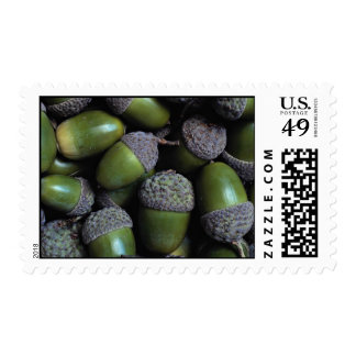 Green Acorn nuts Stamps