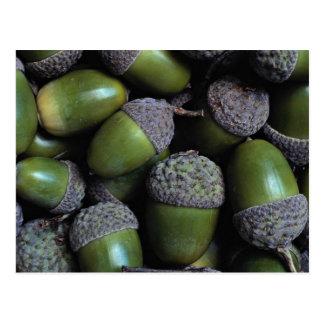 Green Acorn nuts Postcard