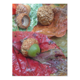 Green Acorn on a Red Fall Leaf Postcard