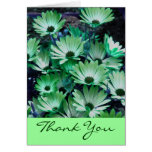 Green African Daisies Floral Thank You Card