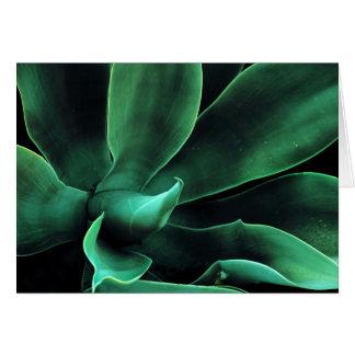 Green Agave Attenuata Card