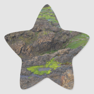 green algae and tide pools on rocks star sticker