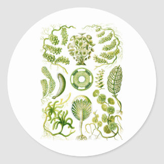 Green Algae Classic Round Sticker