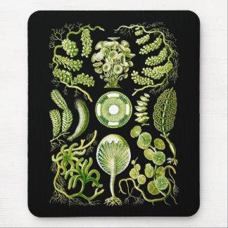 Green Algae Mouse Pad