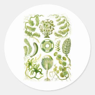 Green Algae Round Sticker