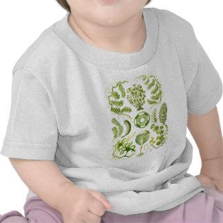 Green Algae Tee Shirts