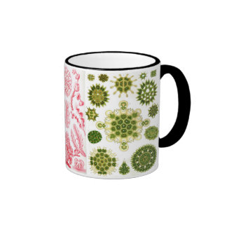 green algae, various, haeckel mugs