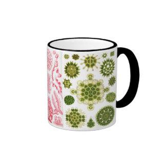 green algae, various, haeckel ringer coffee mug