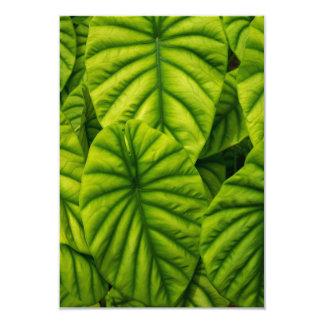 Green Alocasia Cuprea Leaves Hawaii Island Card