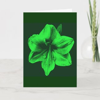 Green Amaryllis zazzle_card