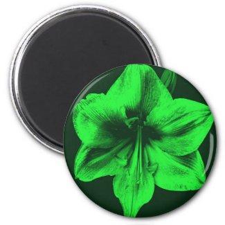 Green Amaryllis zazzle_magnet