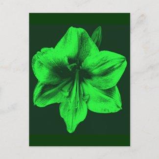 Green Amaryllis zazzle_postcard