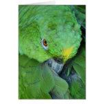 Green Amazon Parrot Card