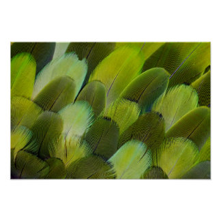 Green Amazon Parrot Feathers Poster