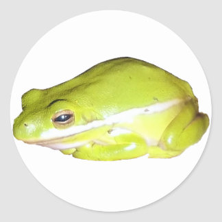 Green American Tree Frog Sticker - Circle