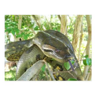 Green Anaconda Postcard