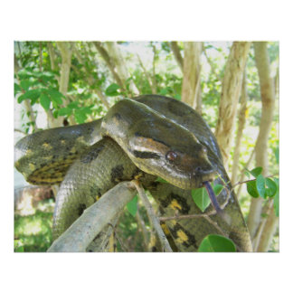 Green Anaconda Poster