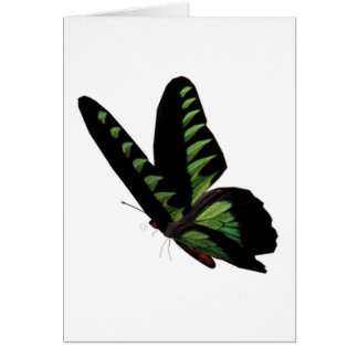 Green and Black Butterfly  Greeting Cards