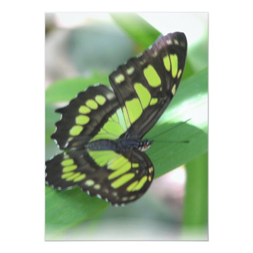 Green and Black Butterfly Invitation