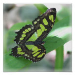 Green and Black Butterfly Print
