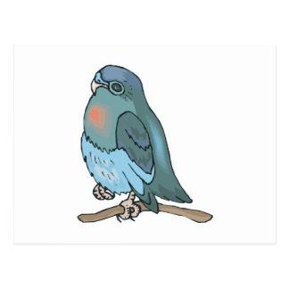 green and blue budgie bird postcard