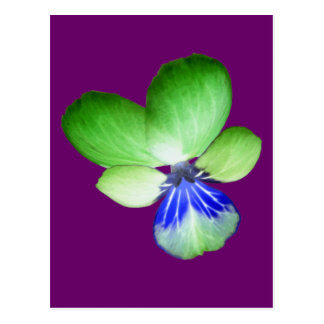 Green and Blue Pansy Postcard