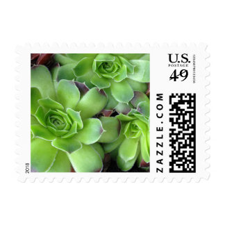 Green and Burgundy Succulent Plants Postage Stamps