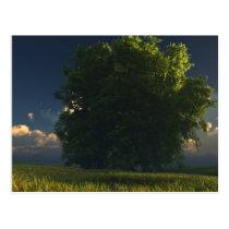 tree, prairie, clouds, landscape, desktop wallpaper, Postcard with custom graphic design
