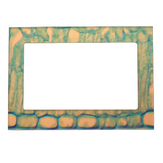 Green and Gold Tortoise Shell Magnetic Picture Frame