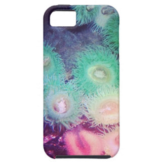 Green and pink anemone iPhone SE/5/5s case