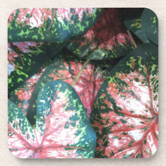 Green and Pink Foliage Coaster
