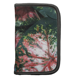 Green and Pink Foliage Organizers