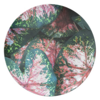 Green and Pink Foliage Plates