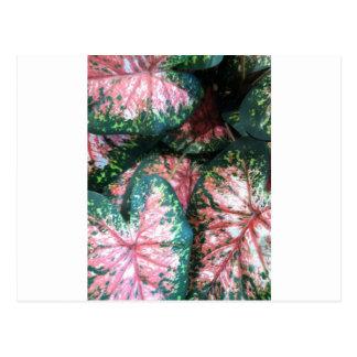 Green and Pink Foliage Postcard