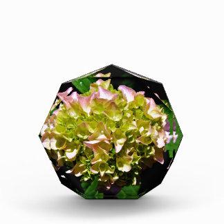 Green and pink Hydrangea Acrylic Award
