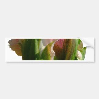 Green and Pink Tulip Bumper Sticker