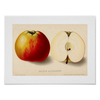 Green and Red Apple Poster