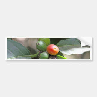 Green and Red Coffee Beans Bumper Sticker