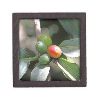 Green and Red Coffee Beans Gift Box