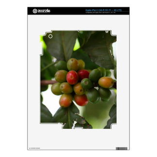 Green and Red Coffee Beans iPad 3 Decals
