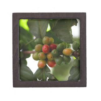 Green and Red Coffee Beans Jewelry Box