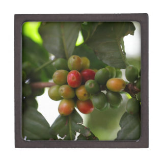 Green and Red Coffee Beans Keepsake Box