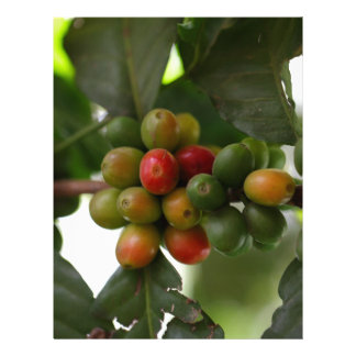 Green and Red Coffee Beans Letterhead