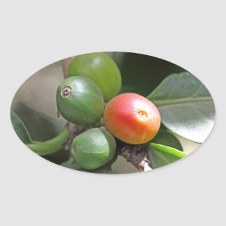 Green and Red Coffee Beans Oval Sticker
