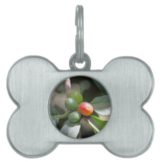Green and Red Coffee Beans Pet ID Tag