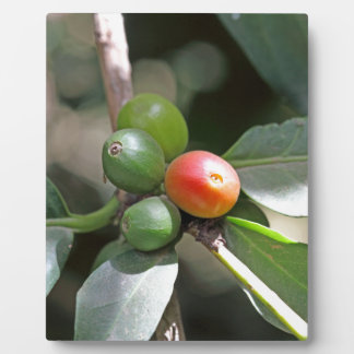 Green and Red Coffee Beans Plaque