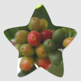 Green and Red Coffee Beans Star Sticker