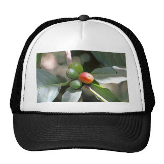 Green and Red Coffee Beans Trucker Hat